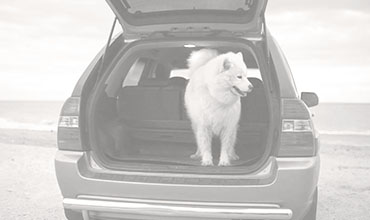 Car parked on the beach with a dog standing in the back of an open trunk.